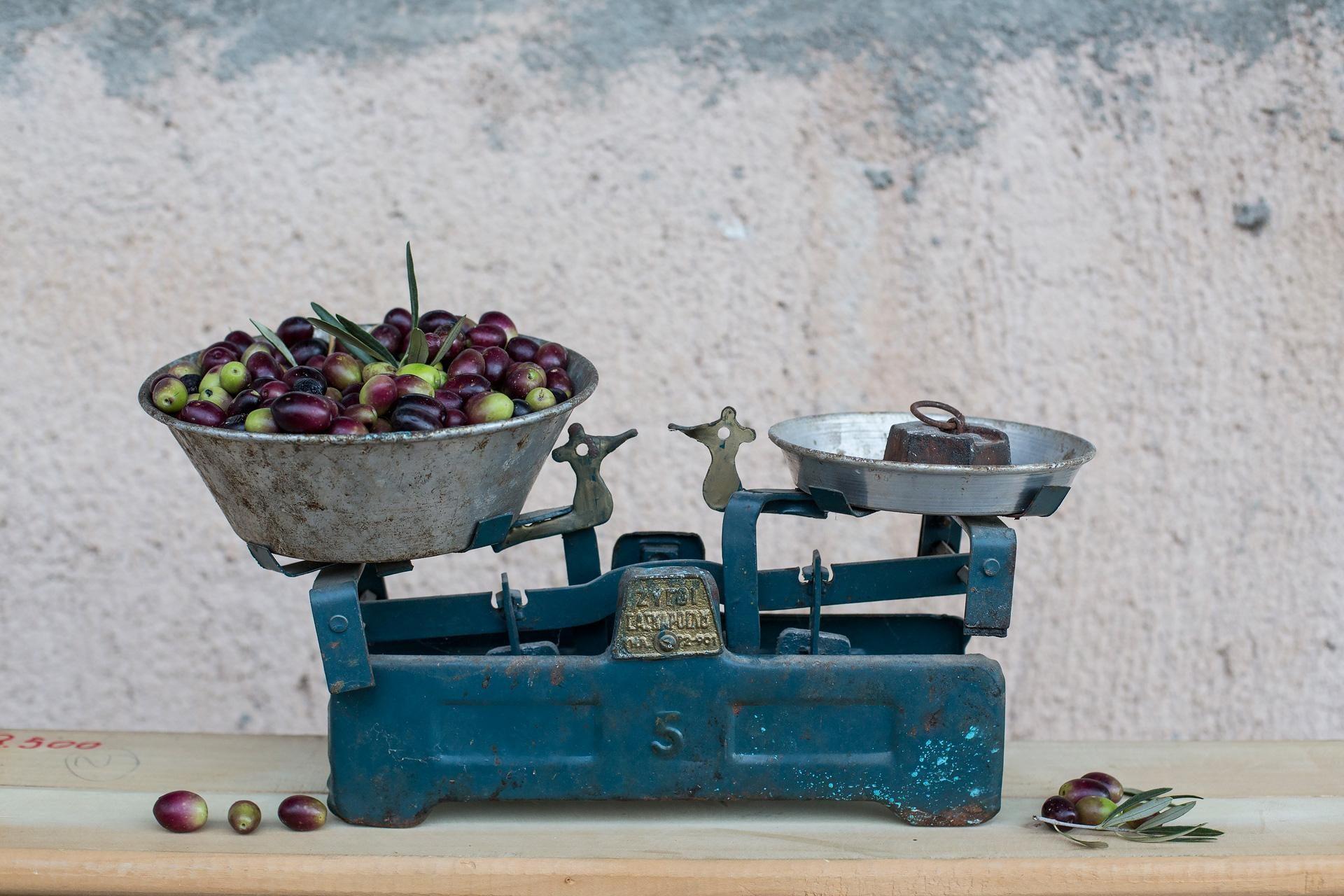Ελιές - Green olives | Green Conservolia - Προϊόντα - Συλλογή Greenolia